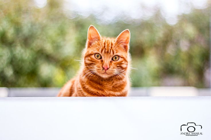 Cat look by Andre  Amaral on 500px