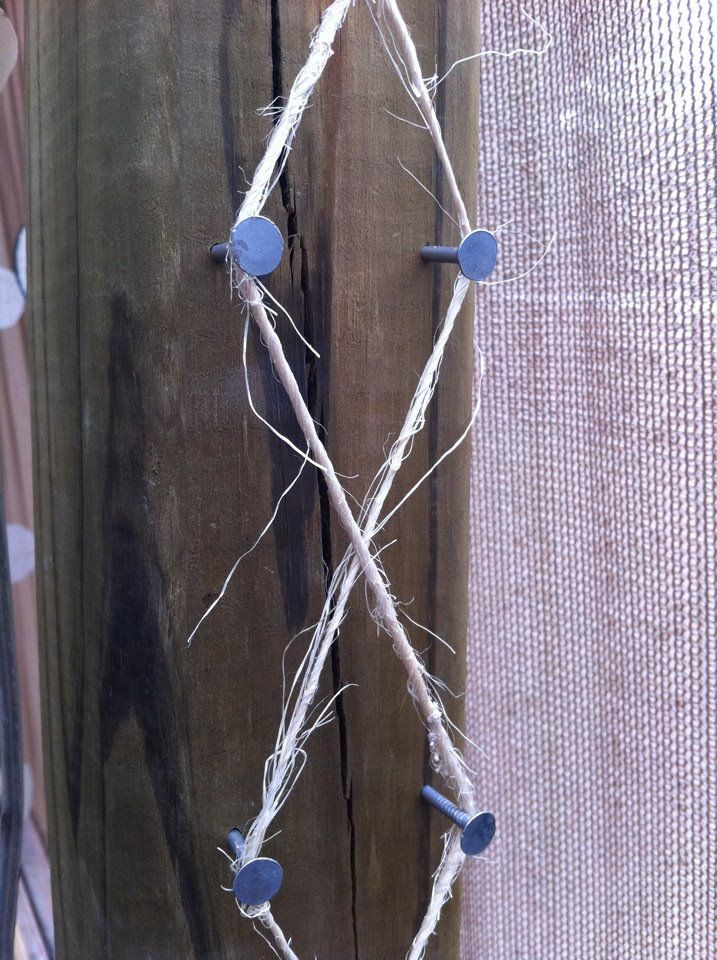 TWINE TRELLIS I love this idea. cheap and easy...