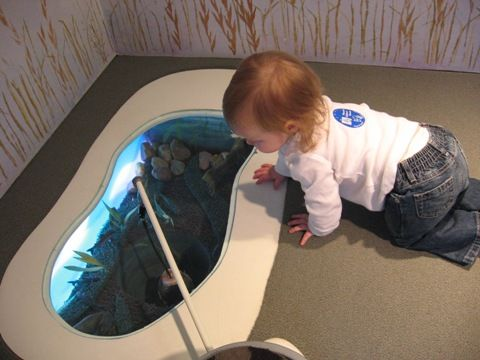 190 best images about unusual aquariums on pinterest for Unusual pond fish