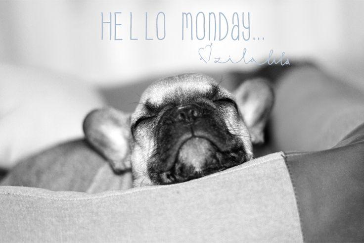#Monday #Morning #Zilalila #Nest #Cozy #Cute #Frenchie #French #Bulldog #Dog #Lazy #New #Week #Hello #Work #Knitted #Gebreid #Semu