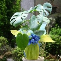 Feng Shui Plants For Office,cakes and chocolates online,Gift Baskets for Men,love baskets for him,best online flowers service,good luck bamboo plant,gift basket online india,Order Gifts For Occasion,wedding gifts for womens,anniversary gifts for parents,birthday gifts for her