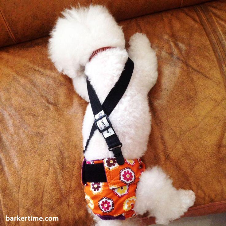 54 Best Barkertime Cute Dogs Images On Pinterest Dog