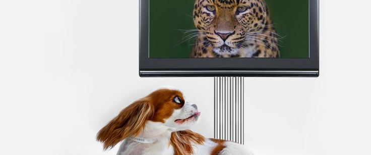 Poor television reception is a common problem that people face in Brisbane. You too may face this problem if you have just bought a new digital television or have bought a digital set-up box.