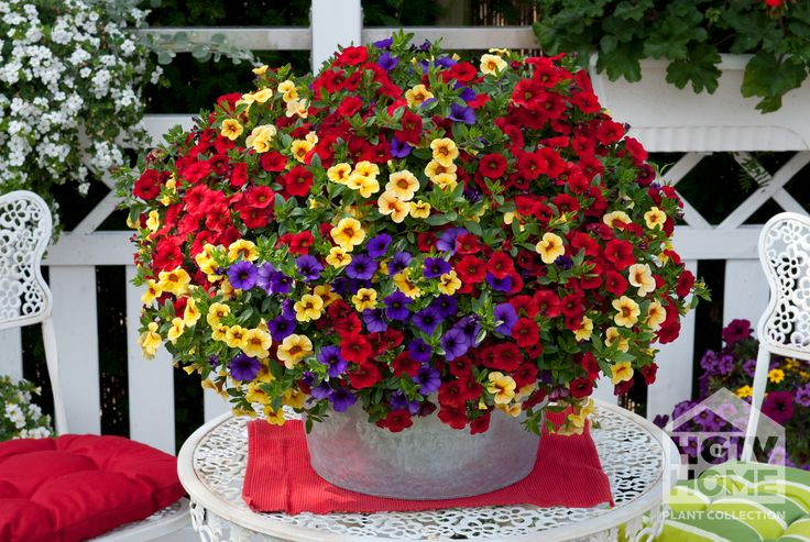 tropical flowers in baskets - Yahoo Search Results