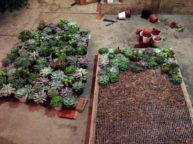 Succulent Wall Art 85 best succulent walls images on pinterest | succulents garden
