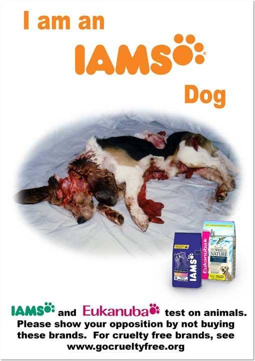 Iams Dog Food Complaints
