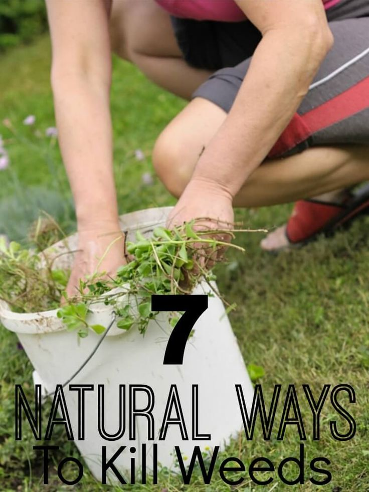 212 best OrganicNatural Weed Killers images on Pinterest Garden