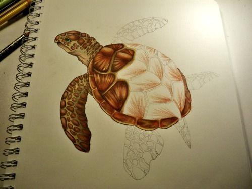 черепаха эскиз - Поиск в Google