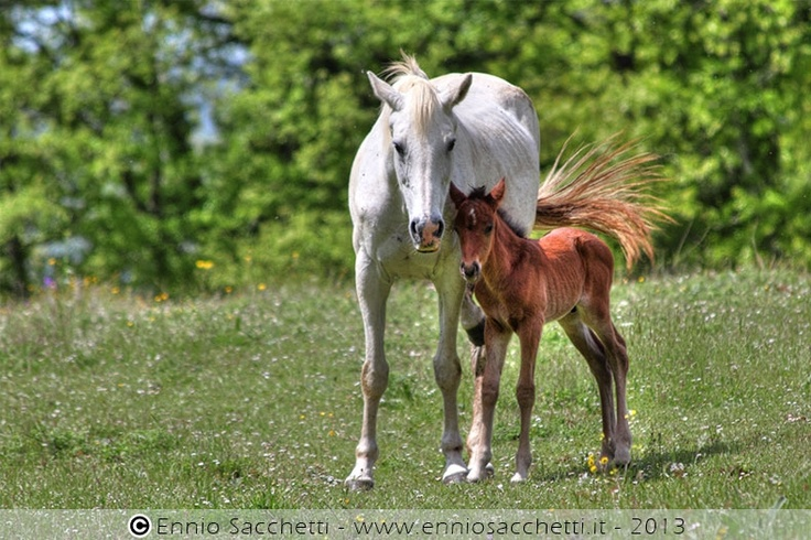 Horse family in HDR