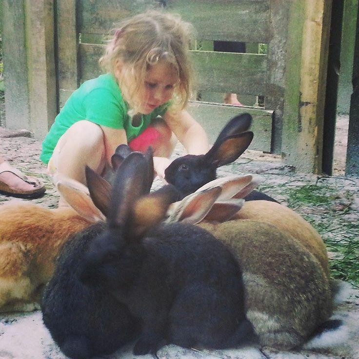 Knuffel konijnen