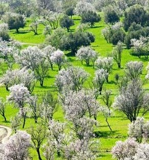 The Almond Tree Festival, Tafraoute, Morocco