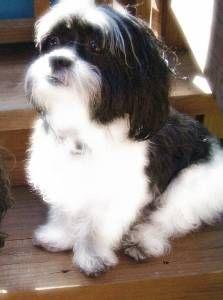 Kyi-Leo.. I miss my Betzi....she was the best dog!