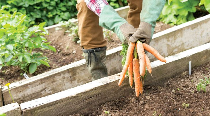 Get ready for spring by starting your own no-dig garden. Janet Luke shows you how to make rich soil with minimal time, spade-work and money.