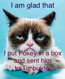 #humor, #grumpy cat, #cats, #quotes, #e-cards