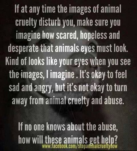 How will these animals get help?