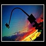 traffic light at sunset boulevard