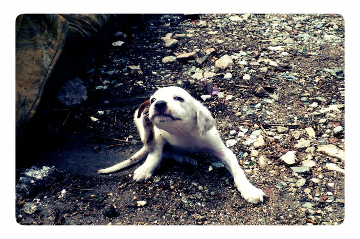Puppy... (by Kami) 2.6.2009