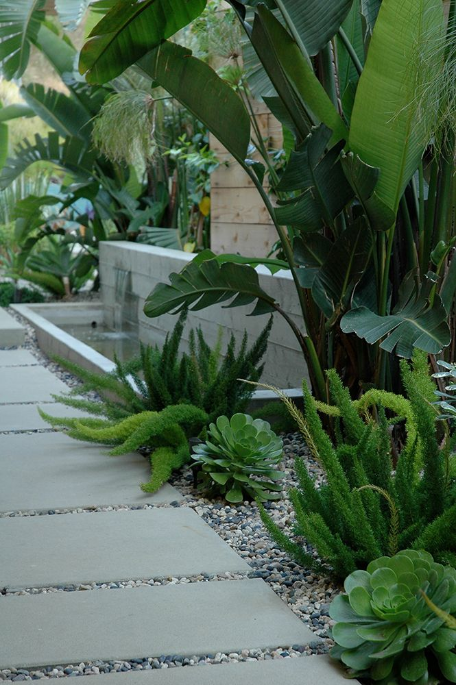 contemporary concrete water feature softened with big leafy green strelitzia pinned to garden design tropical