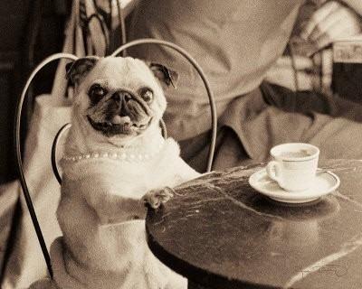 retro elegant pug <3: Teas Time, Art Prints, Afternoon Teas, French Cafe, Dogs Lovers, Teas Ceremony, Pugs Art, Teas Parties, Coff Break