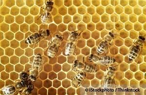 The Latest Weapon in the War on Cancer: Honey Bees  November 24, 2012 | 320,979 views | + Add to Favorites | Available in EspañolDisponible en Español  7,246 		221 	  104  	  	  3.8k  Email to a friend Email  	  Print