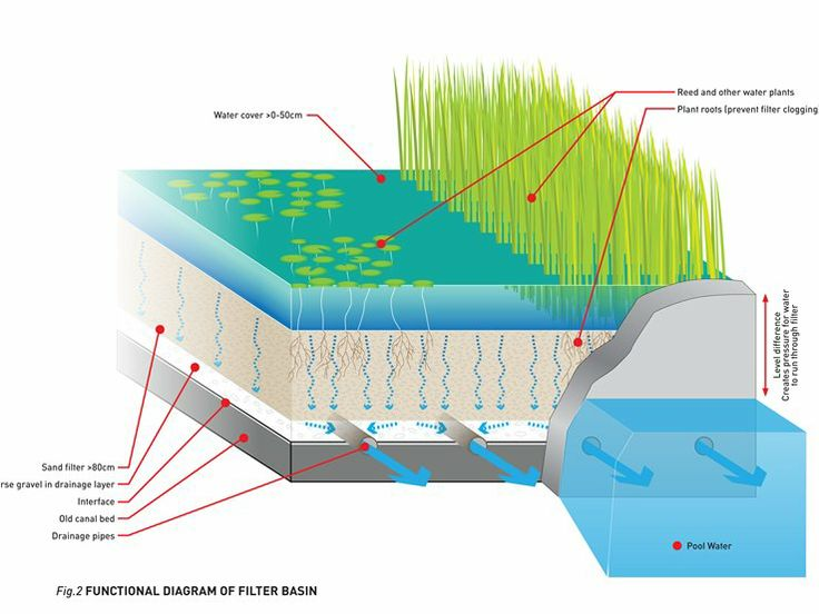 natural pool schematic - Olympic Swimming Pool Diagram