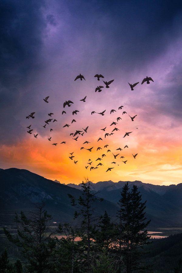 Fly away by Cora Kore, via 500px