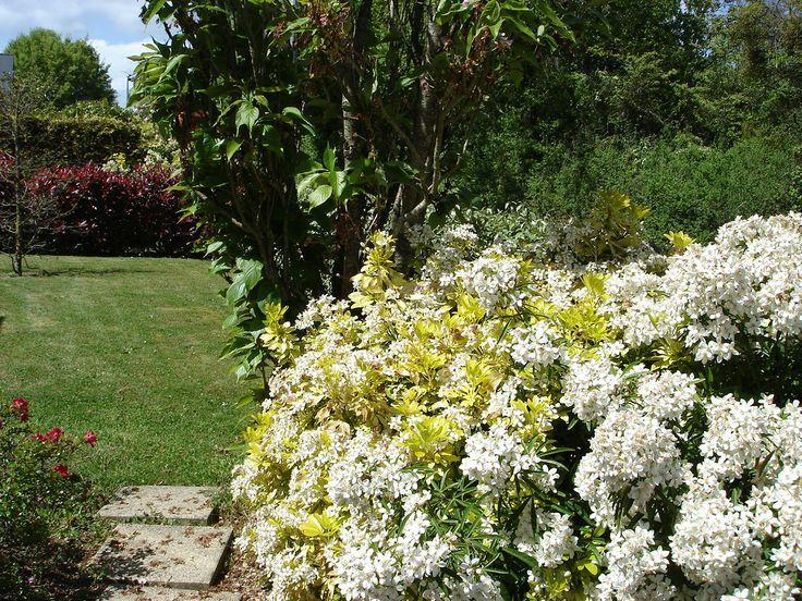 Les 32 meilleures images propos de les fleurs du jardin for A propos du jardin