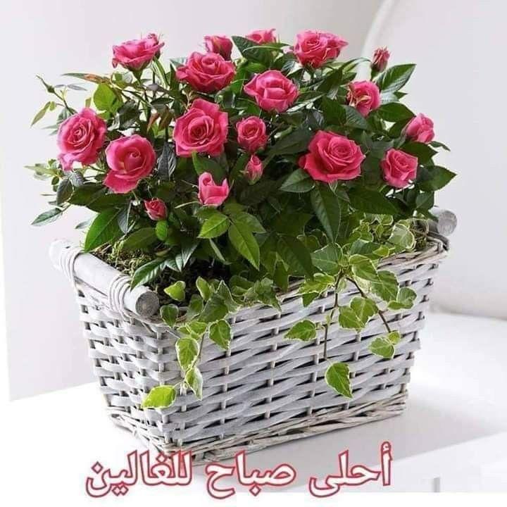 Pin By زهرة الأوركيد On الصباح والمساء Good Morning Gif Decorative Wicker Basket Romantic Love Quotes