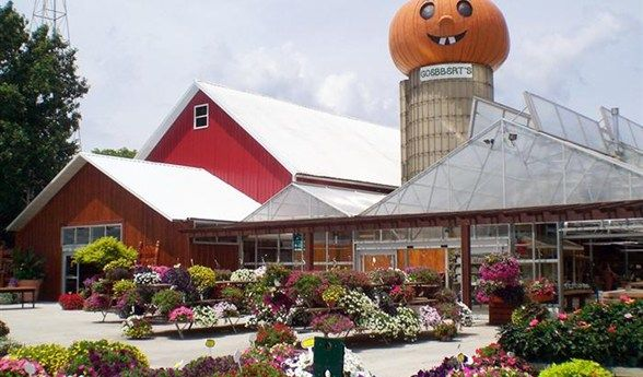 17 Best Images About Awesome Illinois On Pinterest Museums Pumpkin Farm And Oak Ridge