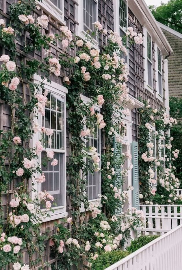 Climbing Roses On House 41
