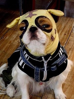 12 Best Images About Dogs In Wrestling Masks On Pinterest