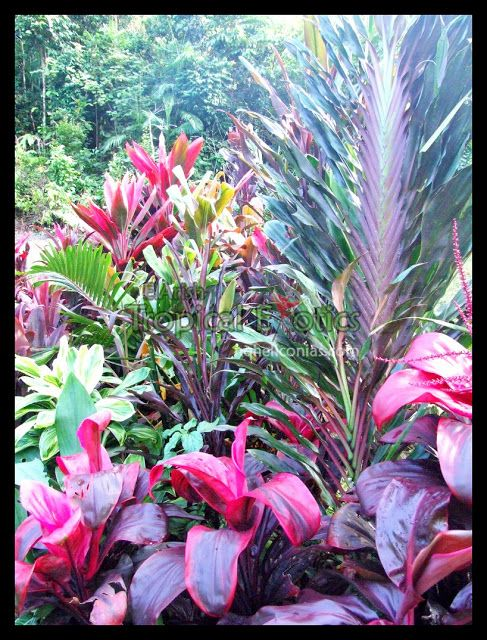 647 best Tropical Garden Ideas images on Pinterest Tropical