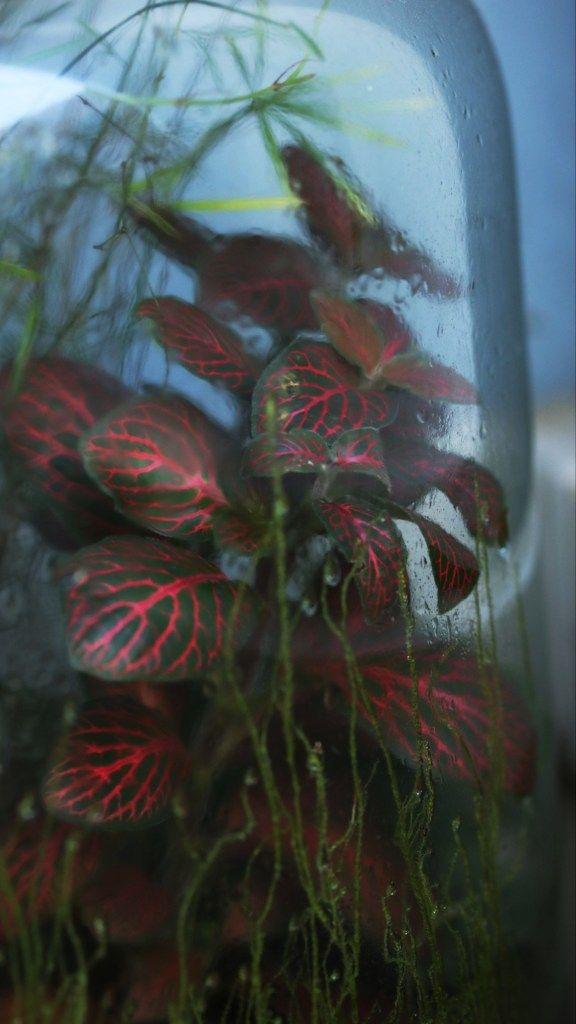 5 Plantes D Interieur Au Feuillage Graphique Et Conseils Jardinage