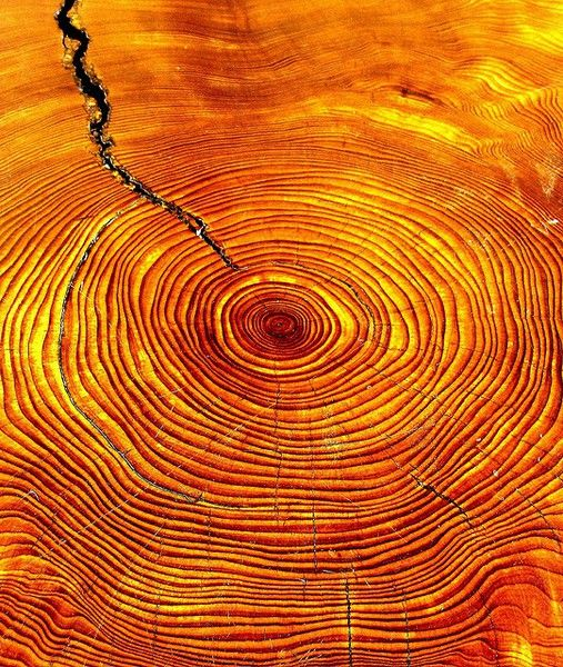 Orange tree rings