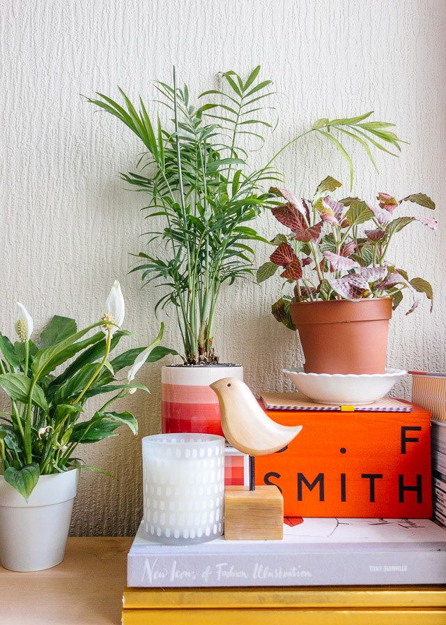 peace lily, parlour palm and fittonia - a little bedroom refresh - cardboardcities