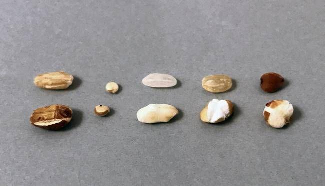 Puff or popping whole grains (other than corn) like Barley, quinoa, Arborio rice, short grain brown rice, buckwheat.