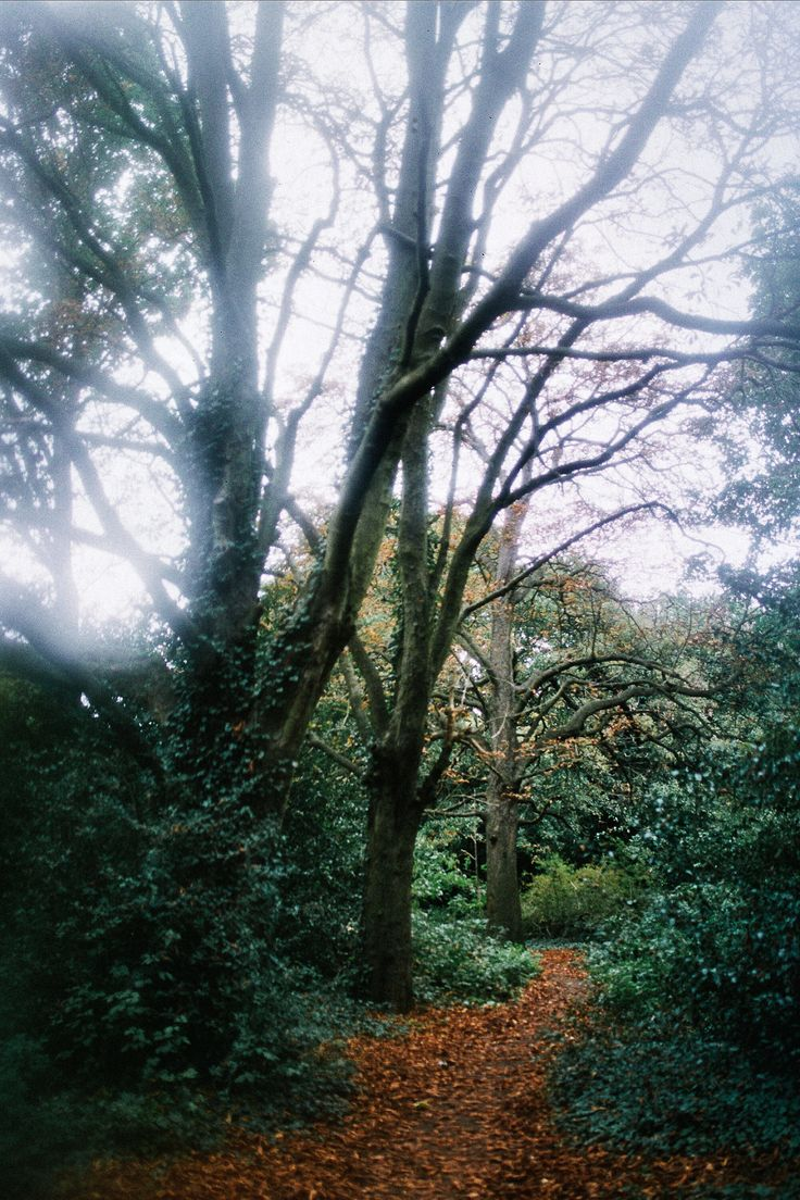Mary Parker Photography - travel #forest #woods #london