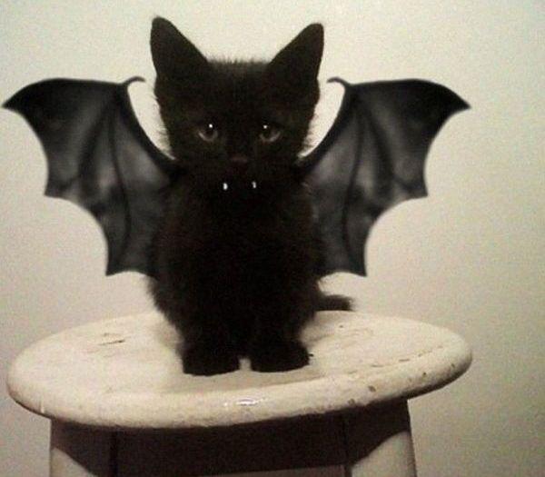 Gato vampírico 1