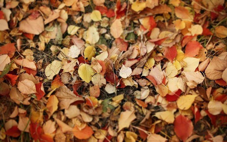 colors of autumn by mircea.fotograf.az