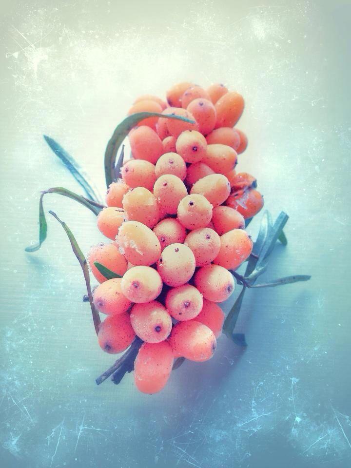 berries, iPhone, art