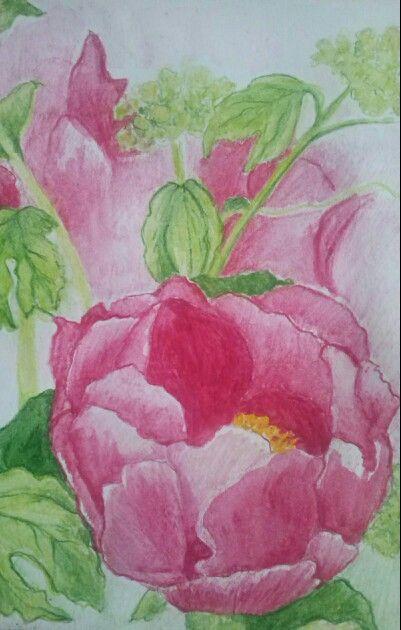 Peonies- aqua colour illustration- by Jitske Jacobs