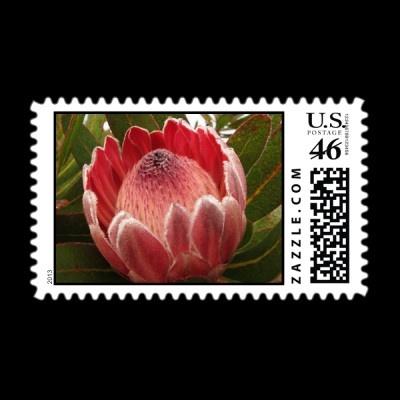 Protea flower postage