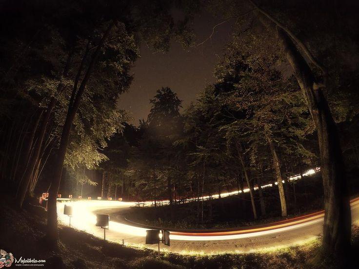 Light . Forest serpent by dfeens