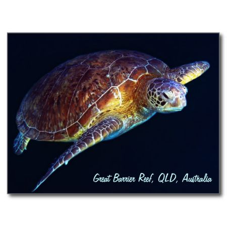 A beautiful postcard showing one of the many sea turtles found on Australia's Great Barrier Reef.