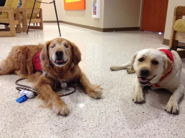 Best Blindness And Dogs Drake Images On Pinterest - Born blind smiley the golden retriever becomes a loving therapy dog