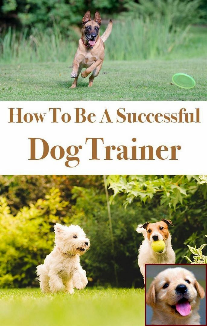 Dog Behavior Kicking Up Dirt And Clicker Training Dogs Pdf Dog