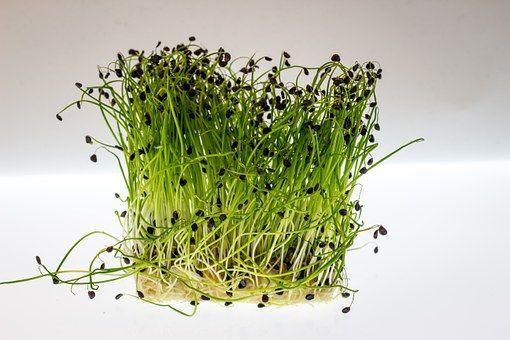 Zbawienny wpływ na stan skóry oraz funkcjonowanie układu pokarmowego i trawiennego mają również takie produkty, jak awokado, imbir, goździki, pestki słonecznika, dyni oraz rośliny kolorowe, czyli jagody, maliny, borówki.