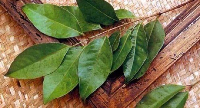 9 Khasiat Tersembunyi Daun Salam - Indopress, Kesehatan Selain menjadi bumbu pewangi dan penyedap masakan di dapur, daun salam juga memiliki manfaat-manfaat tersembunyi lainnya. Berikut 9 manfaat daun salam yang perlu Anda ketahui: Mengharumkan masakan Campurkan …