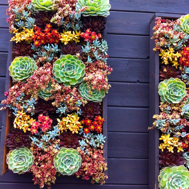 Succulent wall planting