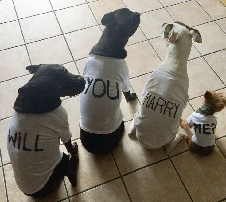 Proposal Ideas Using Pets: 1000+ Ideas About Dog Proposal On Pinterest